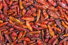 Hete Spaanse peperpeper Stock Fotografie