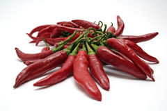 Hete Spaanse pepers stock afbeelding