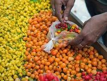 Hete Spaanse pepers peper Stock Foto's
