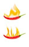 Hete vlammende Spaanse peper Royalty-vrije Stock Afbeelding