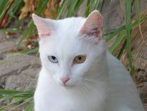 Heterochromia Στοκ εικόνες με δικαίωμα ελεύθερης χρήσης