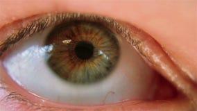 Heterochromia Moving Eye stock footage