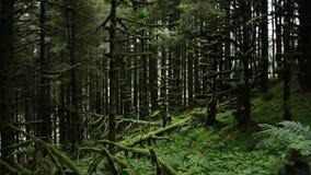 Hetzich beweegt door magisch bemost bos, dolly Volgen schot die doen ineenstorten boom en varens kenmerken stock video