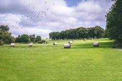 Heu rollt auf einem grünen Gebiet auf irischer Landschaft mit den Vögeln, die weg fliegen Lizenzfreies Stockfoto