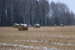 Heu rollt im Schnee auf einem gepflogenen Feld Lizenzfreies Stockfoto