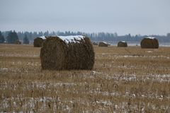 Heu rollt im Schnee auf einem gepflogenen Feld Stockfotografie