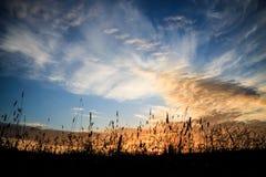 Heu- und Grasschattenbilder und drastischer Sonnenunterganghimmel Lizenzfreie Stockfotografie