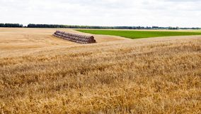Heuballen auf dem Landwirtschaftsgebiet Stockfoto
