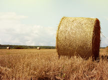 Heuballen rollt auf dem Feld nach Ernte Licht Lizenzfreie Stockfotos