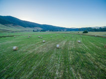 Heuballen zerstreut auf grünes Feld Stockfoto
