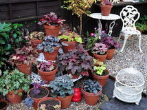 Heuchera garden Stock Photo