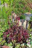 Heuchera and lantern in the garden Stock Photography