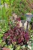 Heuchera och lykta i trädgården Arkivbild