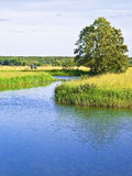 Heuernte auf Flussufer Lizenzfreie Stockfotografie