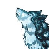Heulender Wolf Head Stockfotos