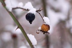 Heupen met sneeuw en ijs worden behandeld dat, royalty-vrije stock foto's