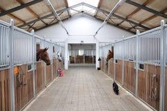 Heure alimentante pour le cheval brun et blanc Image stock