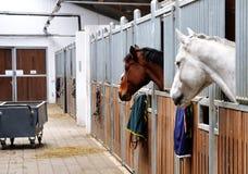 Heure alimentante pour le cheval brun et blanc Photos stock