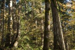 Heure d'or dans la forêt, temps de zen, fond, détails de nature photographie stock libre de droits