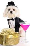 Heure heureuse de cocktail maltais Image stock