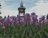 Heure pour des tulipes Images libres de droits