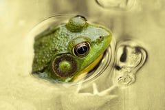 Heure pour la grenouille Photos stock