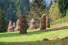 Heuschober nähern sich dem Wald Lizenzfreies Stockfoto