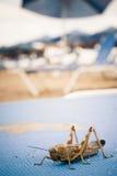 Heuschrecke auf Strandruhesessel stockfoto