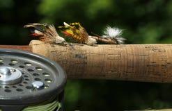 Heuschrecken-Fischen-Fliegen Lizenzfreies Stockfoto