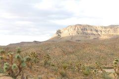Heuvel in Arizona Royalty-vrije Stock Foto