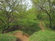 Heuvel, bomen en voetpadklei Royalty-vrije Stock Foto