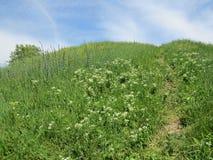 Heuvel in de lenteweide royalty-vrije stock foto