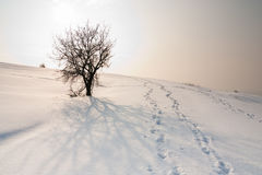 Heuvel die met sneeuw wordt behandeld Royalty-vrije Stock Foto
