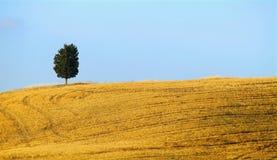 Heuvel en cipres stock afbeelding