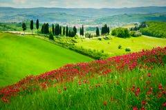 Heuvel en cipressen stock afbeeldingen