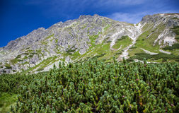 Heuvel in Hoge Tatras, Slowakije Royalty-vrije Stock Afbeelding