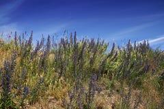 Heuvel met bloemen Royalty-vrije Stock Afbeelding