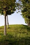 Heuvel met bomen Royalty-vrije Stock Foto