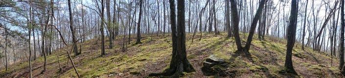 Heuvel met bomen Stock Afbeeldingen