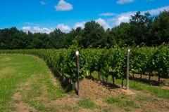 Heuvel met cirkelwijngaard wordt geplant die royalty-vrije stock foto