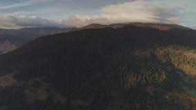 Heuvel met groen dicht die bos door heldere ochtendzon wordt aangestoken stock footage