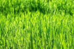 Heuvel met groen gras royalty-vrije stock afbeeldingen