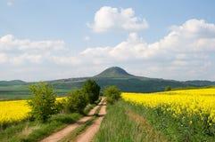 Heuvel Mila in Ceske Stredohori, Tsjechische republiek royalty-vrije stock foto's