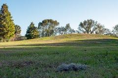 Heuvel in park Stock Foto's
