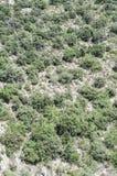 Heuvel` s vegetatie in Frankrijk stock afbeeldingen