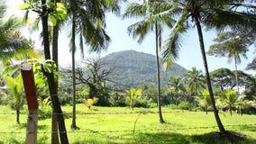 Heuvel, Sri Lanka stock video