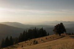 Heuvel van één boom stock foto's