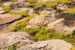 Heuvelhelling en bloem Stock Fotografie
