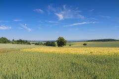Heuvelig landschap met tarwegebieden onder een blauwe hemel stock fotografie