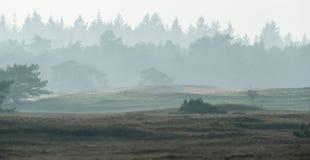 Heuvelig nevelig landschap met sparbos op horizon royalty-vrije stock foto's